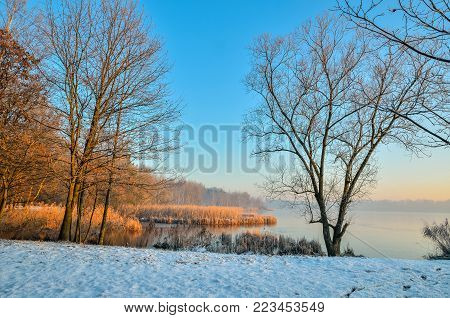 Winter morning landscape. Plants and trees by the lake.