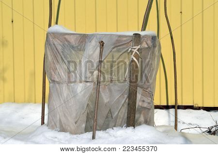 Warm shelter tree for winter protection in the garden.Geotextile white membrane