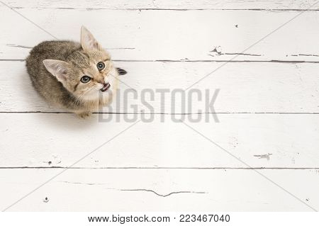Cute tabby young cat looking up seen from a high angle view on a white wooden background with copy space