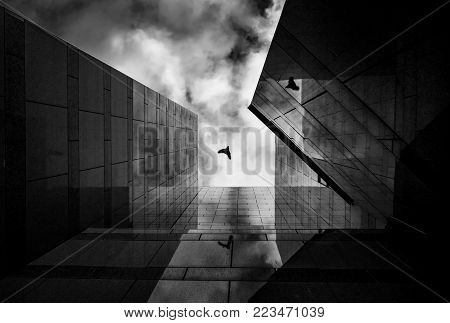 Up view on modern business building and bird flying on background. City urban architecture tower. Window reflections looking and blue sky.