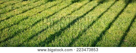 Green grass with dark shadow of banisters. Empty background, close up view with details, banner.