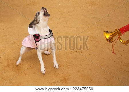 a small dog barks at the sound of a child's pipe