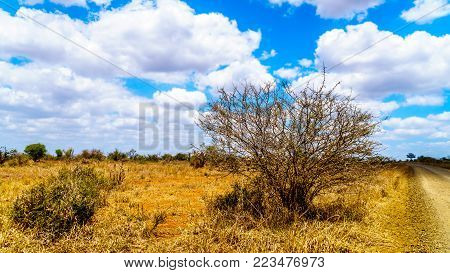 Yellow Billed Hornbill hiding in a shrub in Kruger National Park in South Africa