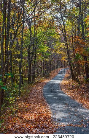 A road passes through the Fall foliage of Jenny Jump State Forest in New Jersey.