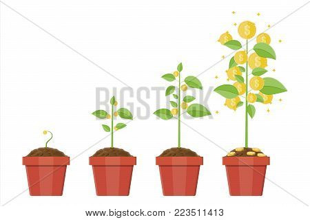 Growing money tree in pot. Stages of growing. Gold coins on branches. Symbol of wealth. Business success. Timeline. Flat style vector illustration.