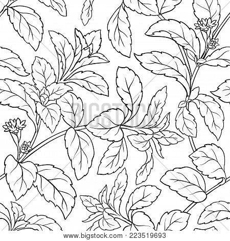 stevia leaves seamless patter on white background