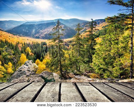 Autumn Forest Pattern With Dominant Spruce Tree On Sunny Day, Autumn Background Concept