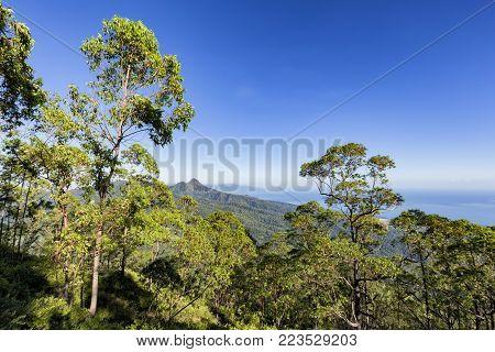 The Tree line on the hike down Mount Egon on the Indonesian Island of East Nusa Tenggara.