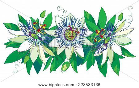 Vector horizontal garland with outline tropical blue Passiflora or Passion flowers, bud, leaves and tendril isolated on white background. Ornate floral in contour style for exotic summer design.