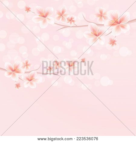 Sakura blossoms. Branches of sakura with flowers. Cherry blossom branch on pink bokeh background. Vector EPS 10 cmyk