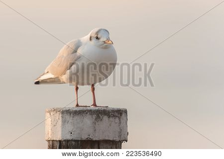 a solitary seagull has settled on a pole in the water
