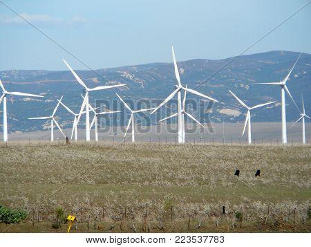 Group Of Older Windmills