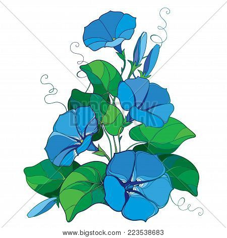 Vector bouquet with outline Ipomoea or Morning glory flower bell in pastel blue, green leaf and bud isolated on white background. Perennial climbing plant in contour style for summer design.