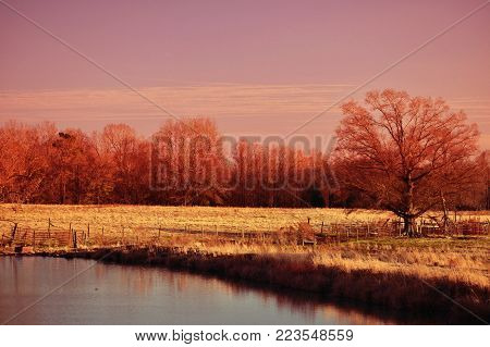 The edge of a little country pond landscape with a prominent tree in a red color filter.