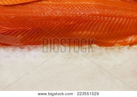 Fresh salmon fillet on ice. Space for text.