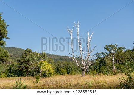 Summer landscape. Bared white birch trunk with branches on background of lush green vegetation and blue sky.
