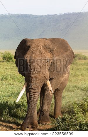 Portrait of large elephant with a broken tusk. NgoroNgoro, Tanzania poster