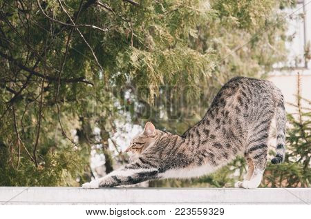 Beautiful young cat or kitty stretching on the garden wall after sleeping