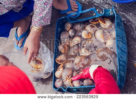 Snail  Shell With Shellfish At Seafood Market.