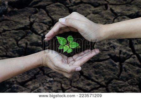 2 hands planted trees on broken soil,Arid,Drought conditions. Ecology Concept.