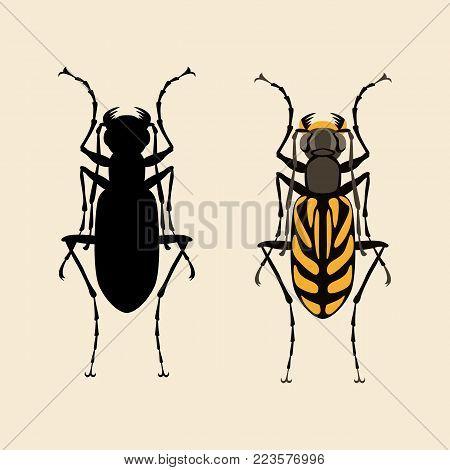 beetle  vector illustration flat style black silhouette  set