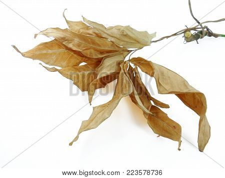 Dried Tree Leaves On A White Background,