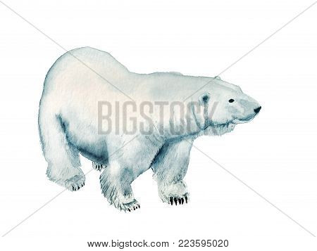 Watercolor image of polar bear on white background