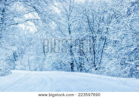 snow covered path turns along the tall trees no one around is very beautiful