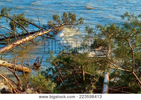 pine fell into a pond, trees after the storm broke and fell into the lake