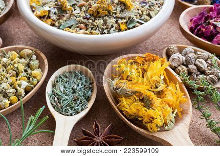 Dried calendula on a wooden spoon, with other herbs in the background (chamomile, horsetail, nasturtium seeds)