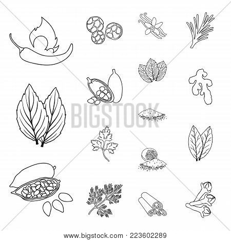 Herb and spices outline icons in set collection for design.Different kinds of seasonings vector symbol stock  illustration.