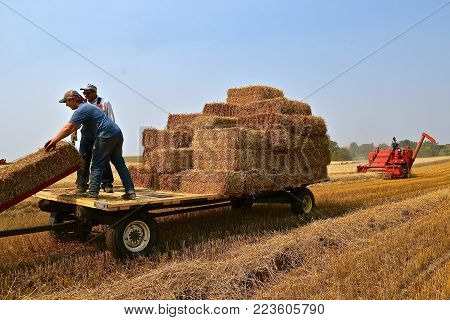 ROLLAG, MINNESOTA, Sept 2, 2017: Unidentified men stack bales on a rack in field demonstrations at the annual WCSTR farm show in Rollag held each Labor Day weekend where 1000's attend.