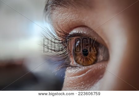 close up of a beautiful brown eye