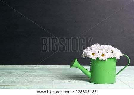 Daisies in a watering can on a black background - Springtime image with a beautiful bouquet of delicate white daisies in a small green watering can on a green table and with a black background.
