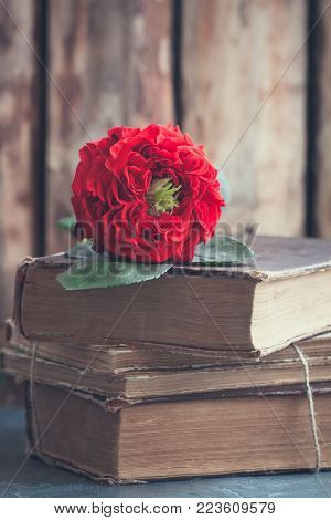 Vintage fresh red garden rose on the pile of old books. Valentine's or Wedding's day postcard concept. Toned.