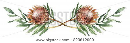 Leaves and protea flower watercolor summer and spring illustration for postcard, posters, lettering, invitations and etc.