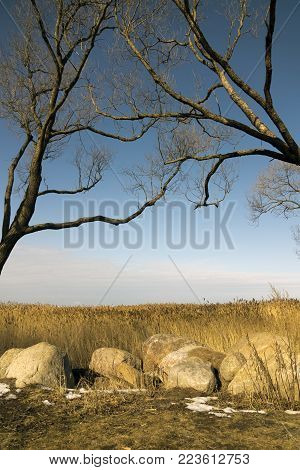 Trees Without Foliage Have Bent Over Boulders And A Dry Cane