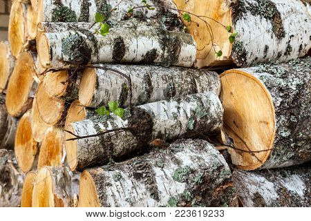 Reserves of birch logs closeup in the village in countryside
