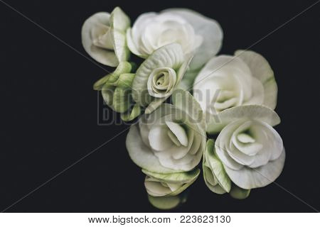 a bunch of white roses on a black background, simple art view