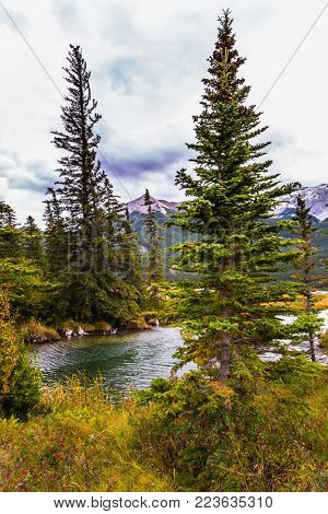 Magnificent journey through the Rocky Mountains of Canada. The valley along the Pocahontas road. Shallow-water lakes, firs and mountains. Concept of active and ecological tourism
