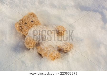 Cute brown bear lies on cold snow with snowflake covering body all alone during winter time
