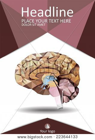 Realistic Human Brain In Low Poly. Cover  Template Of Dissected Brain. Book, Banner. Cerebrum, Epith