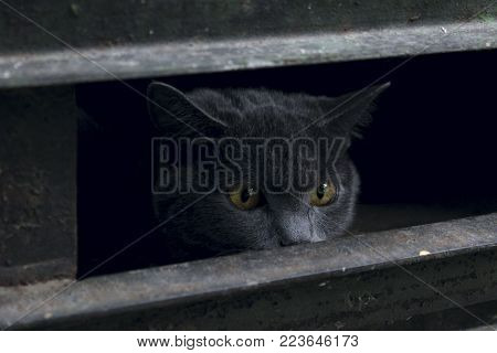Cropped Shot Of Frightened Stray Cat. Cat Need a Vet and a New Home. Stray Cat Looking Through The Hole. World Animal Day, Rescue Animals Concept. Stray Cat in The Darkness. Street Cat.