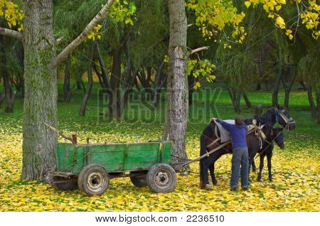 boy cares after the horse in the autumn forest poster