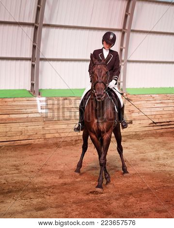 A sweet girl jockey rides a horse in a covered arena. Workout concession to the leg-yield. A pedigree horse for equestrian sport.