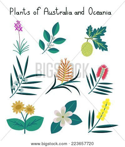 Plants of Australia and Oceania vector set