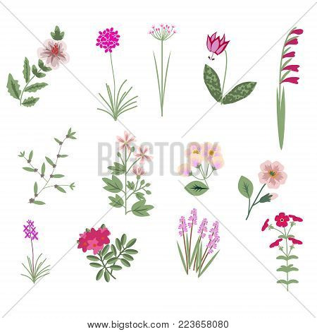 Pink vector isolated decorative various flowers collection