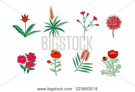 Decorative red various wild flowers vector collection