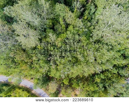 Aerial view of a road crossing a temperate forest. Horizontal composition.