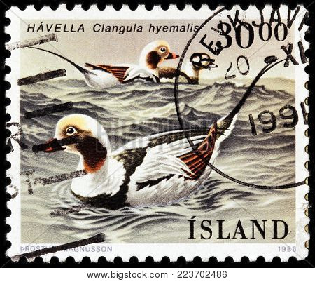 LUGA, RUSSIA - JANUARY 16, 2018: A stamp printed by ICELAND shows the long-tailed duck, once known as old, is a medium-sized sea duck, circa 1988